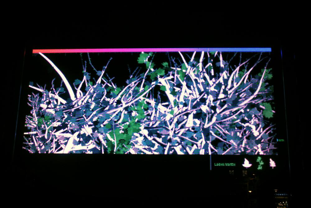 Organic Cinema on LED screen